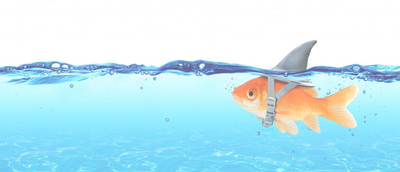 """Trovare nuovi clienti – Il corso di """"Inbound"""" Marketing per liberi professionisti"""